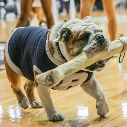 Butler mascot Blue III goes on disabled list