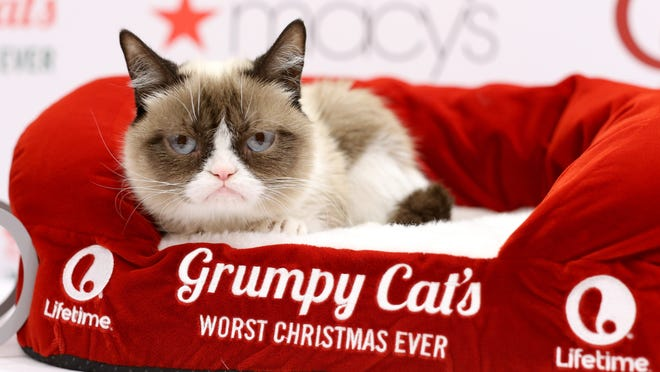 Grumpy Cat, movie star.