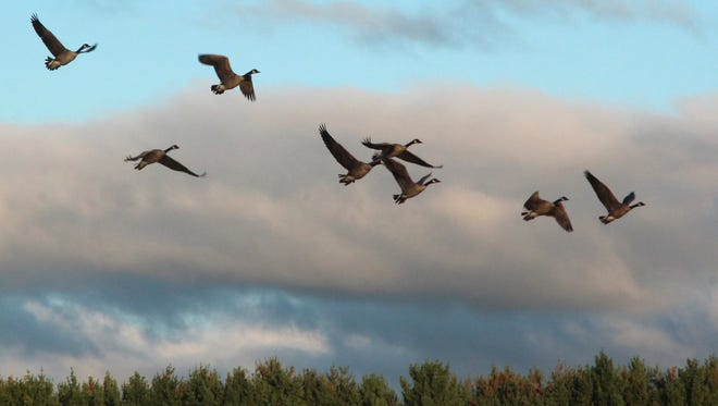 Winter is here. What does all that mean when you're a hunter? Waterfowl season, of course!