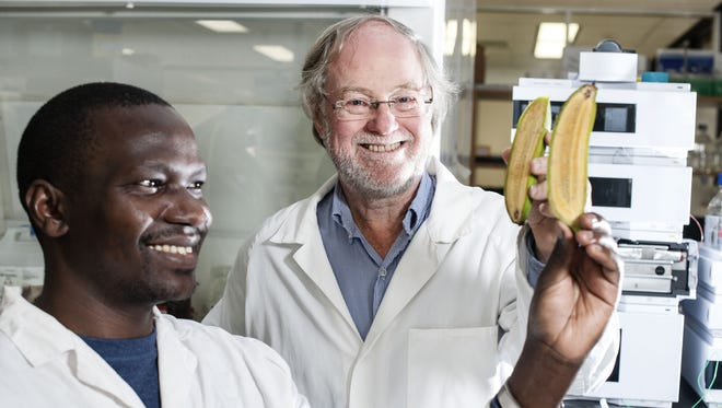 Ugandan researcher Stephen Buah, left, and Australian scientist James Dale show bananas that were altered to produce more beta carotene, which turns into vitamin A after people eat it.