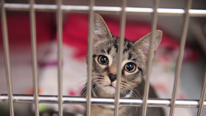 """BISSELL Pet Foundation is hosting """"Empty the Shelters"""" on Oct. 14 in an effort to find up to 2,000 pets a new home."""