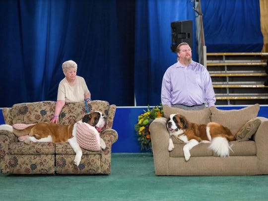 '2018 American Rescue Dog Show' features shelter dogs of various breeds from across the country vying for top dog in the world's most adorable categories. The goal of the show is to inspire viewers to adopt their next dog from their local shelter or rescue organization. The three-hour special is hosted by Rebecca Romijn and Rich Eisen, with celebrity judges Linda Blair, Rick Springfield, Brandon McMillan, Ross Matthews, Andrea Arden and Larissa Wohl covering all the action ringside.