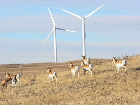 Antelopes pass through Duke Energy's Happy Jack wind