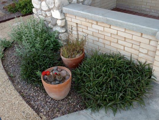 Landscaper Cheryl Garing incorporated potted cactus