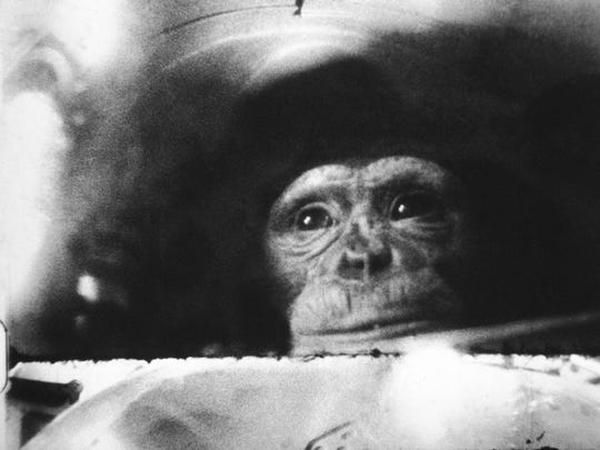 This is how Ham the chimp appeared in his capsule during his space flight from Cape Canaveral, Fla., on Feb. 2, 1961.