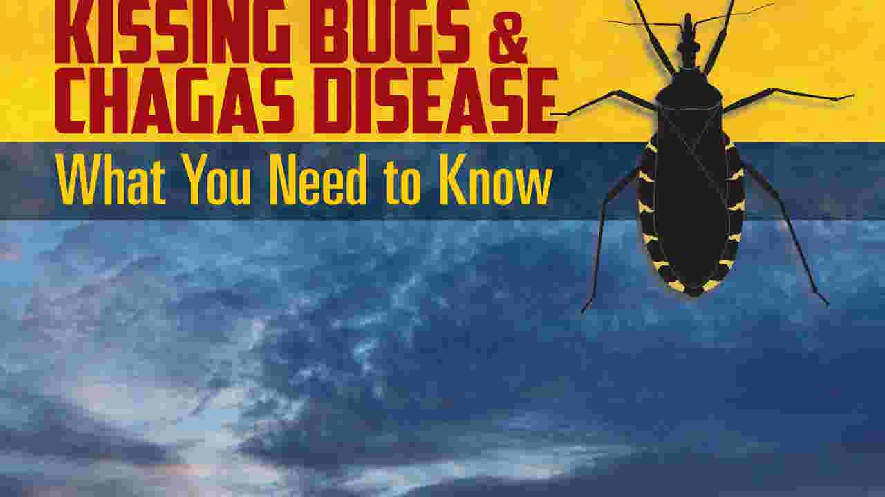 The insidious kissing bug and its deadly bite