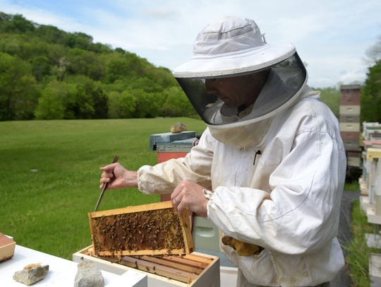 Local bee farmer Jay Williams checks on his hives on