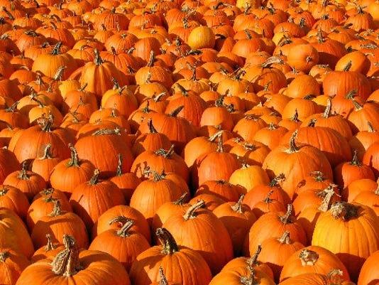 6361316554-tcfe-pumpkin2.JPG