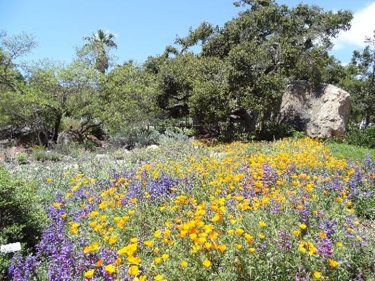 Explore the Santa Barbara Botanic Garden this weekend.