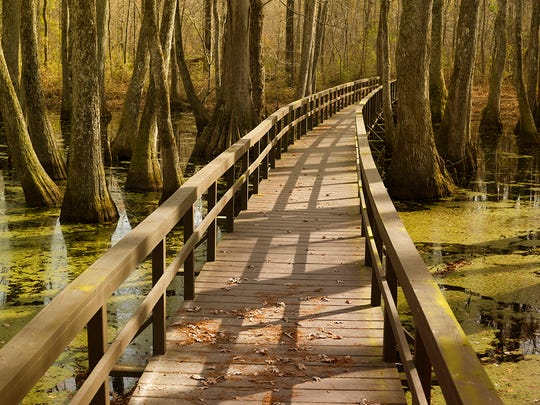 The Cypress Swamp on the Natchez Trace Parkway