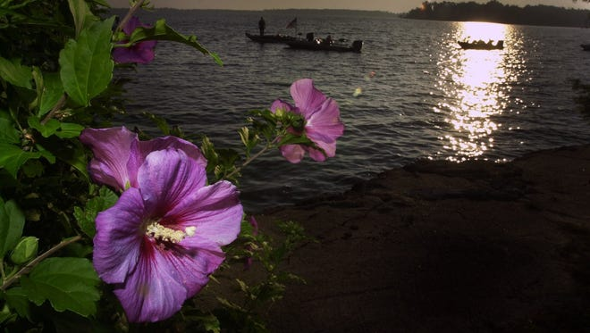 Flowers onshore at the American Legion boat launch frame boaters about to head off for the start of the second day of the 2002 BFL All-American Tournament on Cross Lake.