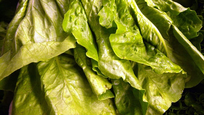 Romaine lettuce was the source of an E. coli outbreak that began at a Yuma farm.