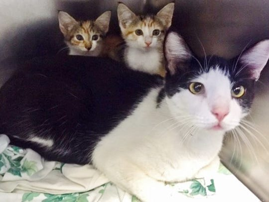 Cats and kittens rescued from hurricane-ravaged Texas