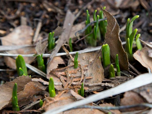 1 lead first day of spring
