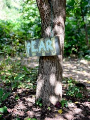 A hand-painted sign denotes that a tree produces pears