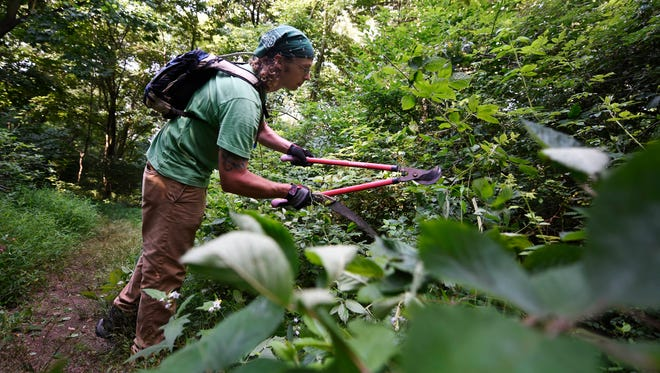 Lancaster County Conservancy stewardship coordinator Steve Mohr trims overgrown branches and bushes on Kelly's Run trail Thursday. Mohr and other members of his team began maintenance on the trail as soon as a verbal agreement of use was reached between the Conservancy and Talen Energy on Wednesday.