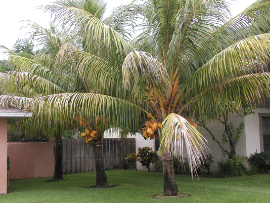 635990989388737732-palm.png