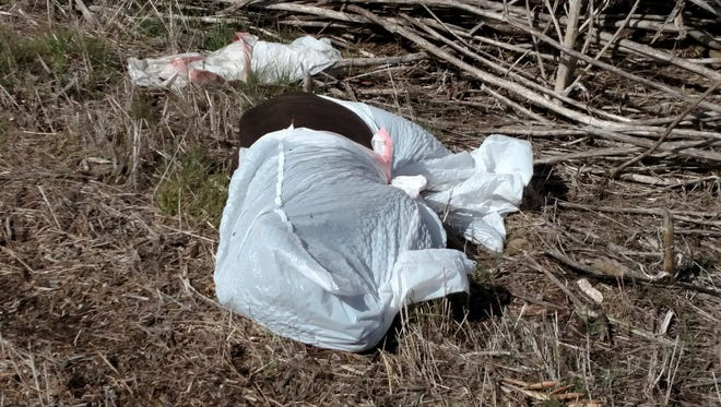 The Tulare County Farm Bureau reports that Illegal dumping is a growing problem in rural parts of Tulare County. In this file photo, an animal carcass is shown dumped along Myers Avenue in Exeter.