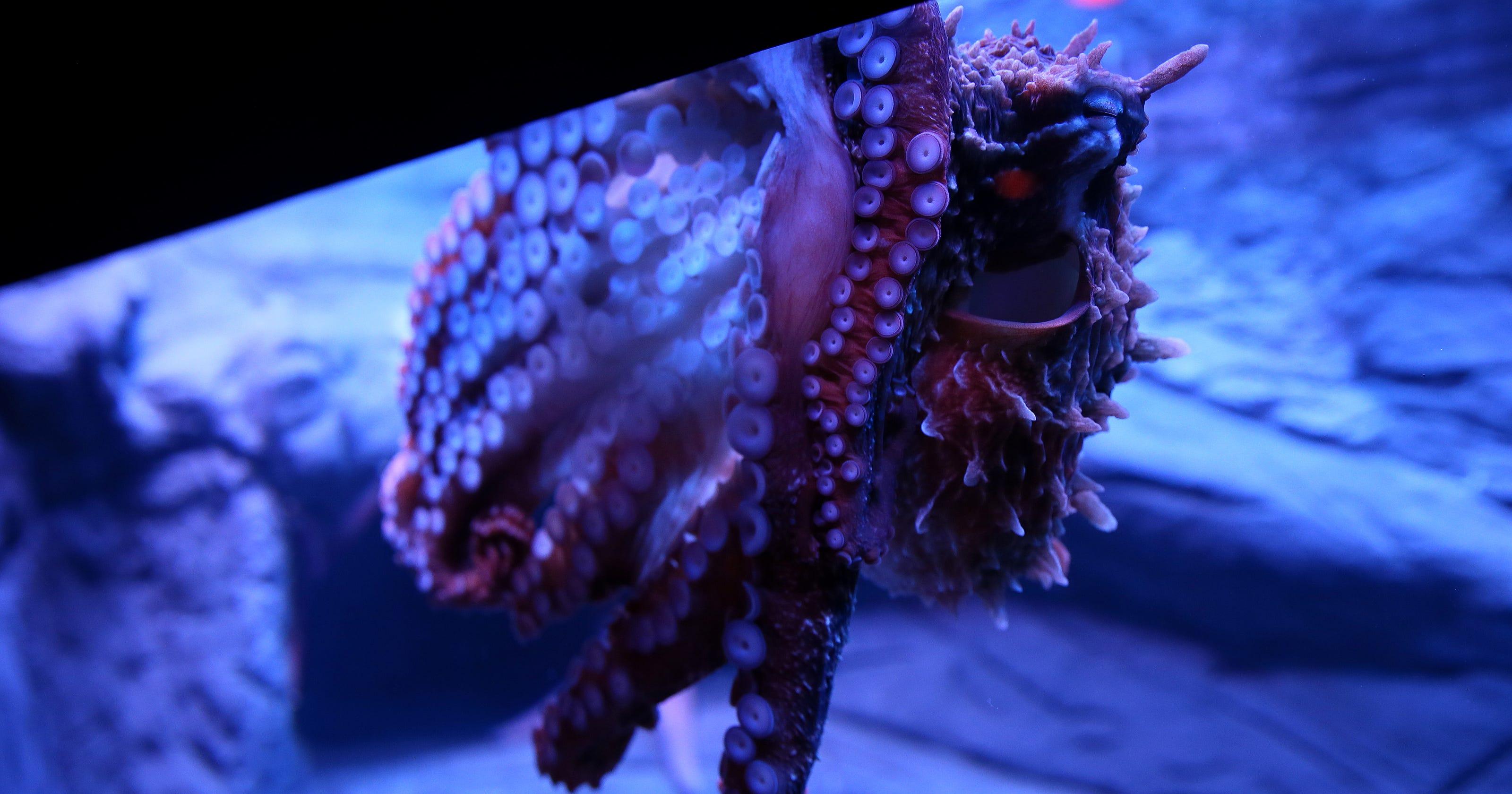 newport aquarium s ring of fire