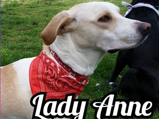 Lady Anne is a 2-3-year-old, spayed female Labrador retriever. She if fully vetted, house trained, and has a microchip. Lady Anne is very loving and gets along great with children, cats, and other dogs. Find her through Companion Pet Rescue of Middle Tennessee, 615-260-8473, www.adoptapet.com/companion-pet-rescue-of-middle-tennessee/available-pets/.