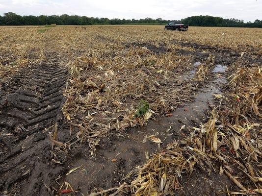 Illinois Corn Harvest_Muno.jpg