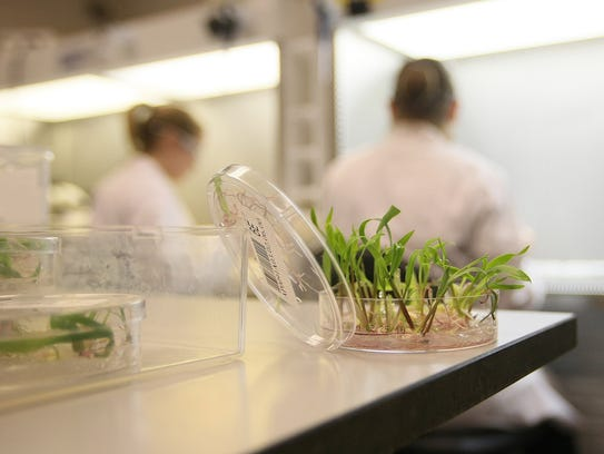 DuPont Pioneer scientists work in one of the company's