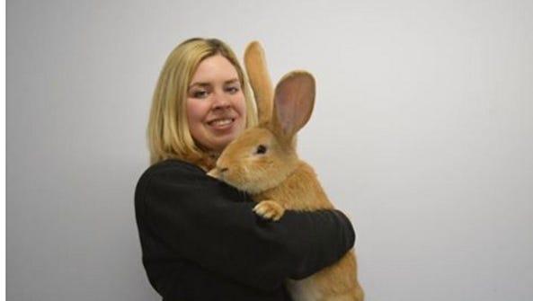 Atlas, a giant rabbit, needs a new home.