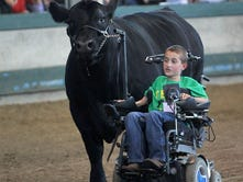 'Cow whisperer' boy in wheelchair leads steer, melts hearts at Iowa State Fair