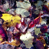 Leaves from dogwood, beech and tulip trees lay flat on the ground where they can form a grass-killing mat.
