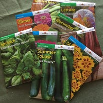 The Hoosier Gardener: Seeds can be easy to grow in garden