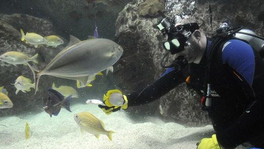 This file photo shows fish at the National Aquarium in Baltimore.
