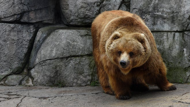 A bear show slated to take place at next week's Sioux Empire Sportsmen's Show is drawing criticism from animal rights advocates.