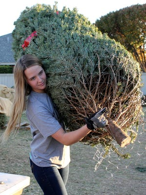 Peyton Wood carries a Christmas tree for a family Sunday, Nov. 26, 2017, at the Optimist Club of Wichita Falls Christmas tree lot near the corner of Southwest Parkway and Taft.