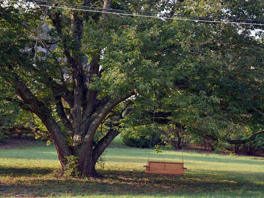 A huge tree, complete with wooden swing, sits on the