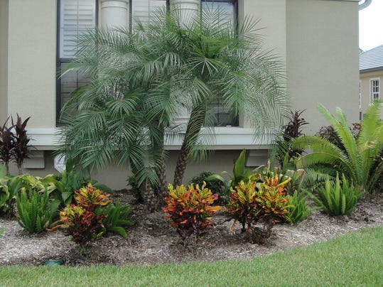 Pygmy date palms help define tropical landscapes for Garden design with palms