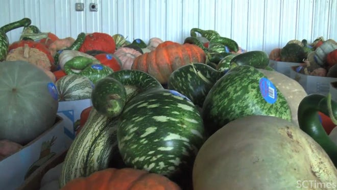 Stoney Brook Farms wrapped up this fall harvest season with 4,000 bins of pumpkins, which adds up to about 2.5 million pounds of pumpkins. The farm also harvested squash.