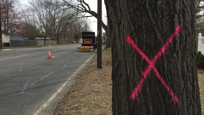 These pink Xs appeared last month on trees along Route 33 in Neptune. They're a part of a $2.6 million road project that will last until fall.
