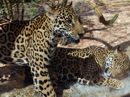 -Jaguar03.jpg_20130703.jpg