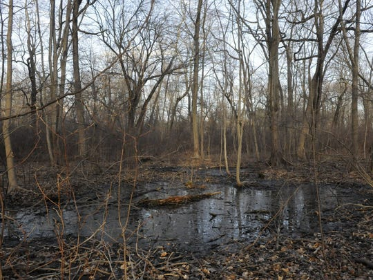 A section of Lillian Thomas Natural Area in Allendale as seen this month. The park is part of the land under the oversight of the Passaic River Coalition.