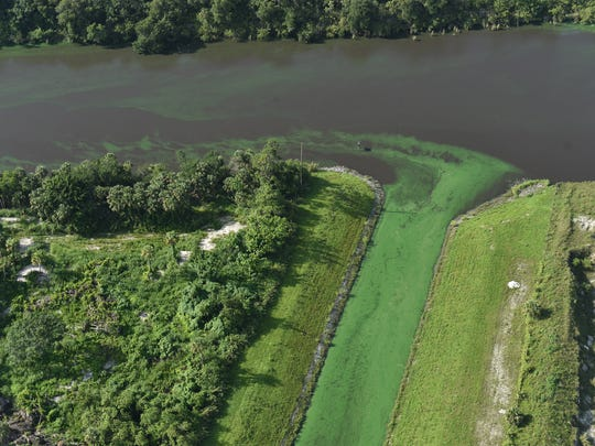 Algae in the St. Lucie Canal (C-44) as seen from the