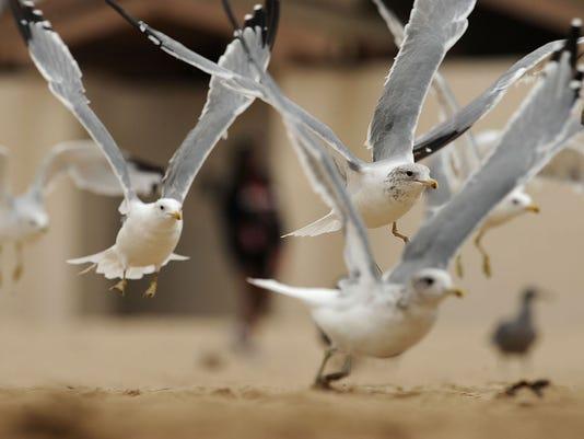 flockofseagulls1.jpg