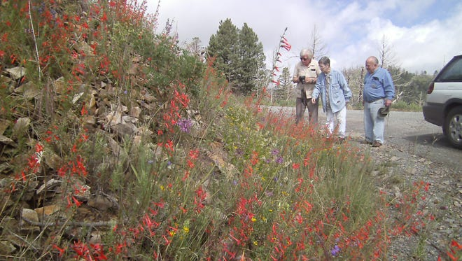 Lincoln County Bird Club members (L-R) Jim, Anita and Ernie enjoy the profusion of wildflowers including masses of bright red Skyrocket Gilia, foreground.