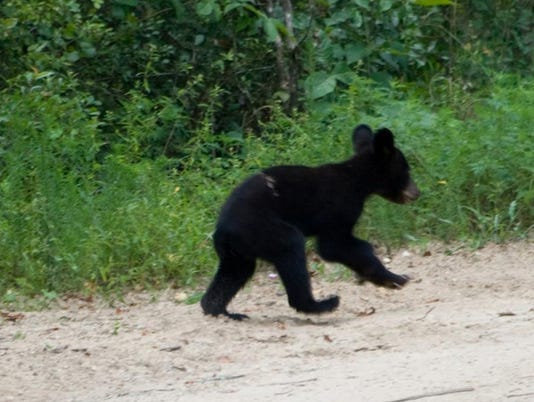 -Bear Cub Jarhead.JPEG_20100814.jpg