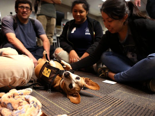 Del Mar College students Christopher Torres (from left), Bobbie Lopez and Samantha Perez spend time with Lucy, a dashshund, on Monday, Oct. 16, 2017, during a Pawsitively Prevent Mid-term Meltdown pet therapy session on the East Campus. The college's counseling center teamed up with Paws Up, Inc. to provide the sessions at each campus for students facing midterm exams. College counselors also provided anxiety screenings and consultations.