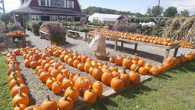 Alstede Farms with hayrides, pumpkins, apple picking, animals and much more.