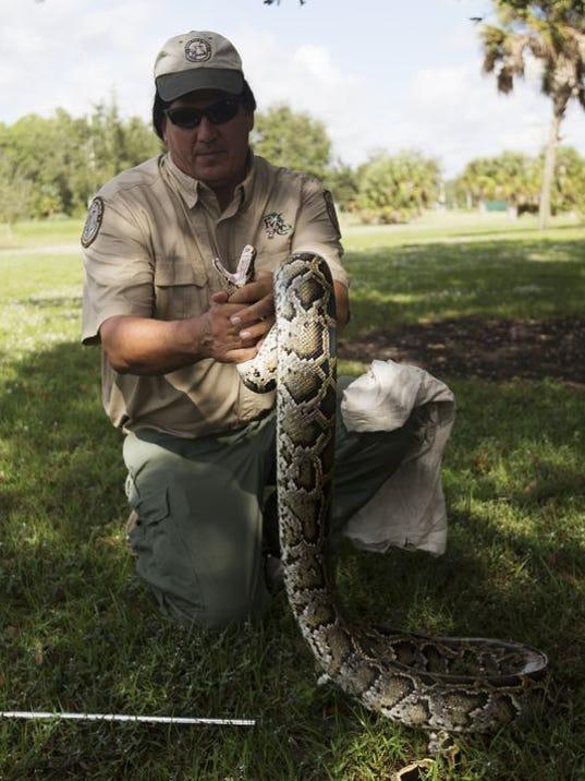 Burmese python hunt