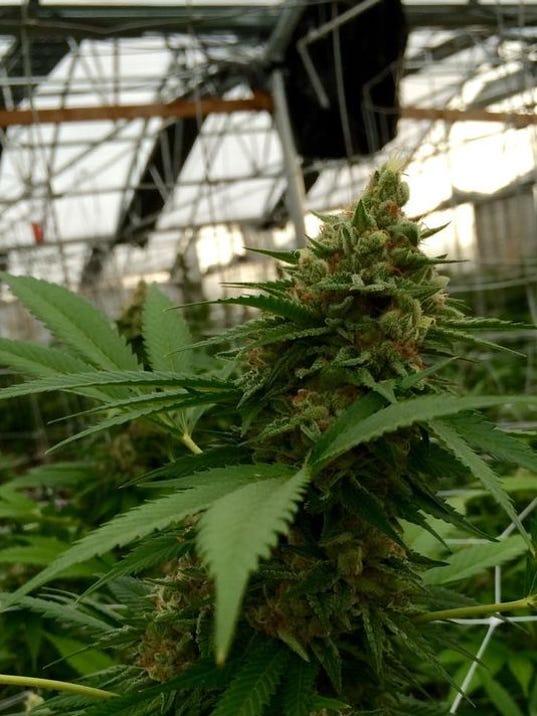 635507509718790009-potplant