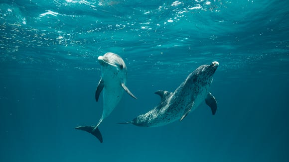 Dolphins in the ocean. Where they belong.