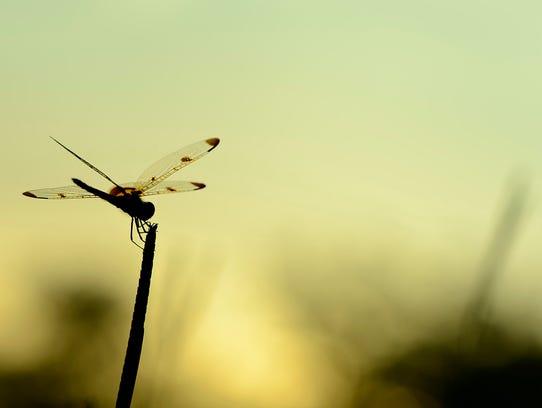 julie-wynn-dragonfly-ugc-yourtake