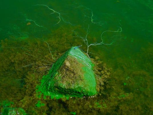 636385721643235585-Algae.jpg